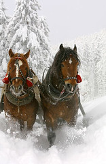 "Sleigh Ride, Greer Arizona • <a style=""font-size:0.8em;"" href=""http://www.flickr.com/photos/77555780@N03/7110596955/"" target=""_blank"">View on Flickr</a>"