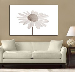 Daisy Beauty Brown (Simply Canvas Art) Tags: art wallart flowerart homedecoration flowerprints flowercanvas flowerwallart flowercanvasprints flowercanvasart flowercanvaswallart
