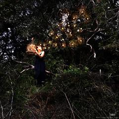 185/366 - Set them free (Mnica Quintana) Tags: nikon fireflies project365 nikond90 luciernagas project366 lluernes gataestintolada monicaquintana