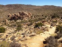 trail up Ryan Mountain (Benzadrine) Tags: california ca cali desert hiking joshuatree highdesert iphone joshuatreenationalpark ryanmountain