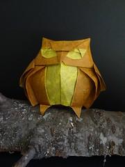 Buho (SweeP_64) Tags: origami roman owl papier folding diaz hibou buho pliage