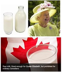raw milk (samalmarr) Tags: news mike milk raw adams natural calcium queen health bones longevity vitamins nutrition joints enzymes eugenics infowars