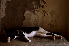 Escaping the heat (Porfidax) Tags: life red white black color green eye animal wall cat nikon heat nikkor scrap 18105 d5000 nikonclubit highqualityanimals