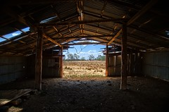 Looking Out (paulhollins) Tags: australia newsouthwales aus gunnedah