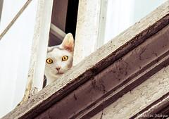 Hypnose (Martin.Matyas) Tags: cat augen dnemark kopenhagen katzen hypnose 2013 0810092013