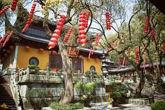 Lantern Dance (Fa Xi Jiang) (Andy Brandl (PhotonMix.com)) Tags: china trees leaves architecture temple movement nikon wind buddhism nopeople courtyard elements lanterns hangzhou zhejiang religioussite photonmix faxijiangtemple