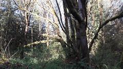 20160331_092302 (ks_bluechip) Tags: creek evans trails preserve sammamish usa2106
