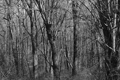 INTO THE TOO WILD (jeremiahwilson) Tags: travel family trees blackandwhite bw nature forest landscape photography woods noir shadows branches dry neighborhood shade habitat
