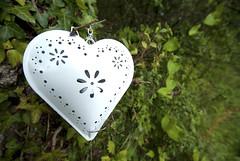Lovehart (Tunde Tenkei) Tags: love nikon pretty heart decoration d200 stockimage giftware