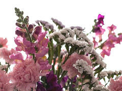 La vie en rose - 1 (Micheo) Tags: pink flowers flores rosa bunch ramo snapdragons carnations claveles conejitos limonium jarrn primavera2016