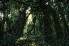 Bosques escondidos (Agudevani) Tags: autumn trees naturaleza verde green nature argentina forest canon landscape arboles bosque t3i 600d