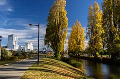 Spot the Mural (Jocey K) Tags: autumn trees newzealand christchurch sky streetart leaves clouds buildings reflections river mural shadows may avon pathway avonriver avonriverprecinct