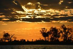 Sunset in Moremi - Okavango delta botswana (sophie.pereira) Tags: africa park sunset lake game nature water animal reserve delta safari botswana moremi okavango