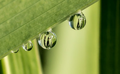 Other Thing's. (Omygodtom) Tags: macro green nature real outdoors nikon natural bokeh nikkor waterdrops tamron raindrop tamron90mm d7100