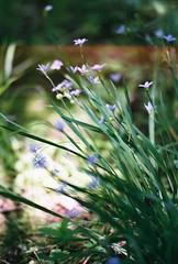 13524387_10154355290152174_3047666401130642866_n (k80anderson) Tags: mo missouri rockbridge state park sinkhole trail flower frog columbia alley urban