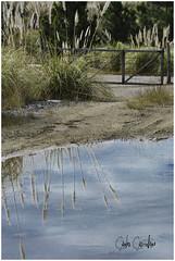 Reflejo (Carlos Castellaro) Tags: agua entrada tranquera plumeros altascumbres plumerillos minaclaverocabracarloscastellaroreflejo