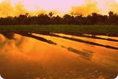 CSI Miami (R.i.c.a.r.d.o.) Tags: trees brazil sky reflection green water river landscape amazon warm waves dramatic filter jungle manaus