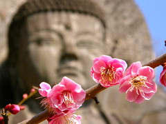 Great Buddha and plum (hamapenguin) Tags: flower nature statue japan temple buddha plum buddhism chiba ume  japaneseplum  greatbuddha
