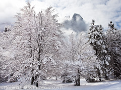 Sugar-frosted Trees (Yosemite) (Robin Black Photography) Tags: trees winter snow storm ice nationalpark frost ngc valley yosemite evergreens oaks naturesbest nationalgeographic conifer sentineldome clearingstorm outdoorphotographer sugarfrosted canon5dmarkii robinblackphotograpy
