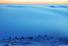 wake me up .. (.:: Maya ::.) Tags: sunset sea wild horses mist mountain nature beauty clouds magic bulgaria mustang moment herd balkan            mayaeye mayakarkalicheva