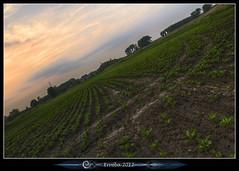 Curves. (Erroba) Tags: trees sunset lines clouds canon belgium belgique curves farming belgi crops veggies erlend slanted 1635 60d titlt erroba robaye