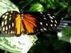 IMG_0500 (Travel and Transitions) Tags: travel ontario canada niagarafalls cliftonhill fallsviewcasino gregfreewin