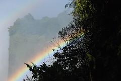 Victoria Falls_2012 05 24_1697 (HBarrison) Tags: hbarrison harveybarrison tauck victoriafalls zimbabwe zambeziriver mosioatunya