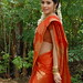 Sada in Saree Pics