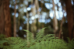 springbrook national park (sue.h) Tags: trees light sky nationalpark australia places queensland ferns forestfloor helios springbrook helios44m4