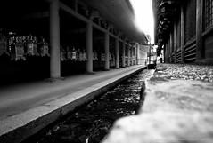 Kasuga Grand Shrine (jev) Tags: leica blue white japan shrine spectrum wide surreal rangefinder super infrared manual nara shinto infra deerpark digitalinfrared fujiwara honden kasugataisha kasugagrandshrine dominantcolor dominantcolour  avenon leicam8 leicaimages wwwartqcom placeofpray