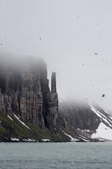 spitsbergen415 bird cliffs (GLRPhotography) Tags: cruise norway svalbard spitsbergen circumnavigation birdcliffs thickbilledmurre brunnichsguillemot hinlopenstrait alkefjellet hitchcockeatyourheartout msexpedition gadventures realmofthepolarbear