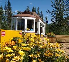 Sunshine Yellow (Mr. Happy Face - Peace :)) Tags: floral clouds whitehorse yukon canada northof60 art hff hbm art2016 fence bench train autumn