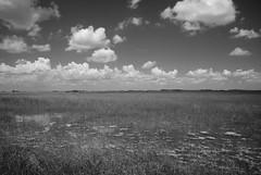 Grass River (sandrine L.) Tags: bw usa landscape florida everglades grassriver