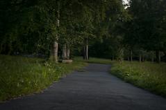 crossroads (Birgit F) Tags: tree green grass norway night forest dark evening norge path hazel slowshutter crossroads aftersunset grimstad austagder fevik hasseltangen