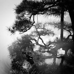 Japanese Garden (s_inagaki) Tags: street blackandwhite tree bird tokyo pond