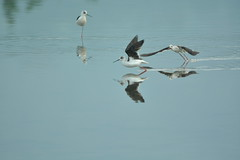 Don't you ever feel tired of this!? / ? (Clark5262) Tags: fly stilts stilt