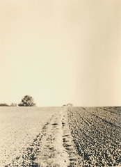 Farmland (justin.syndercombe) Tags: film darkroom farmland lith linhof carbon mountnessing moersch technika70