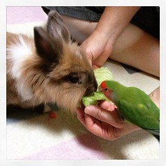 (meme@) Tags: rabbit bird animal   instagram ifttt