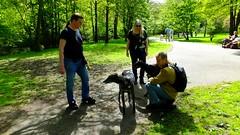 dogs walking their humans (byronv2) Tags: park woman dog greyhound man dogs tom river scotland glasgow melanie gordon adi westend starsky riverkelvin kelvinwalkway rnbkelvin