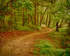 River Path (CDE1231) Tags: trees nature landscape photography nc belmont path peaceful cde