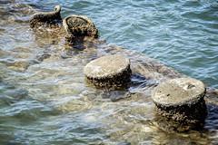 DSC_0042 (screamer1983) Tags: arizona usa japan hawaii harbor oahu navy roosevelt missouri pearlharbor pearl bombs uss bombing fdr yamamoto infamy toratoratora