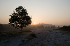 Misty Morning (Anita van Rennes) Tags: morning mist fog sunrise ochtend zonsopkomst brunssummerheide