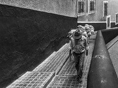 Cuesta arriba / Uphill (Guanajuato, México. Gustavo Thomas © 2016) (Gustavo Thomas) Tags: cuesta stair street calle man hombre burro mula mule carga blackandwhite blancoynegro bnw monochrome monocromático guanajuato méxico mexicano mexican hat sombrero tiring cansado escaleras