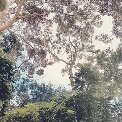 (fernanda.vieira) Tags: park parque sky tree nature landscape heart natureza paisagem cu anpolis corao rvore parquedamatinha