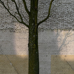 Urban nature 16 (w.eras) Tags: urban nature tree wall light shadows bricks p1090852