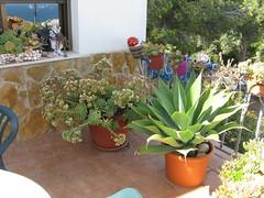 10.5.2012 Im Garten 061 (wilhelm.haardt) Tags: antjes blumen peniscola antjesblumenpracht