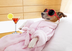 dog spa wellness (designteambrussel) Tags: dog pet beauty sunglasses animal comfortable drunk relax cozy bed healthy funny meditate peace drink body sleep humor dream martini towel center calm hangover cocktail terrier grooming health lazy retreat lie tired enjoy harmony massage jackrussell siesta rest leisure balance meditation therapy care fitness bathrobe spa luxury recovery wellness treatment