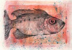Glass Eye Fish (amwelsh) Tags: redfish drawing