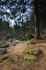 The Hermitage (Kwozie) Tags: black tree green rock pine tripod soil filter cokin p121s em20120324smu20120324dunkeld