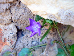 under stone ... there's life (whatyoucantsee) Tags: blue sky lake flower butterfly lago shine purple cielo cocker montaa mariposas pesca almendros ramas